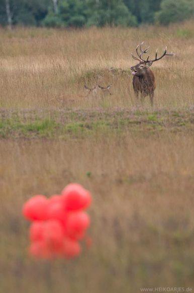 Ballone in der Natur