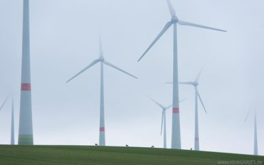 Rehwild im Windpark